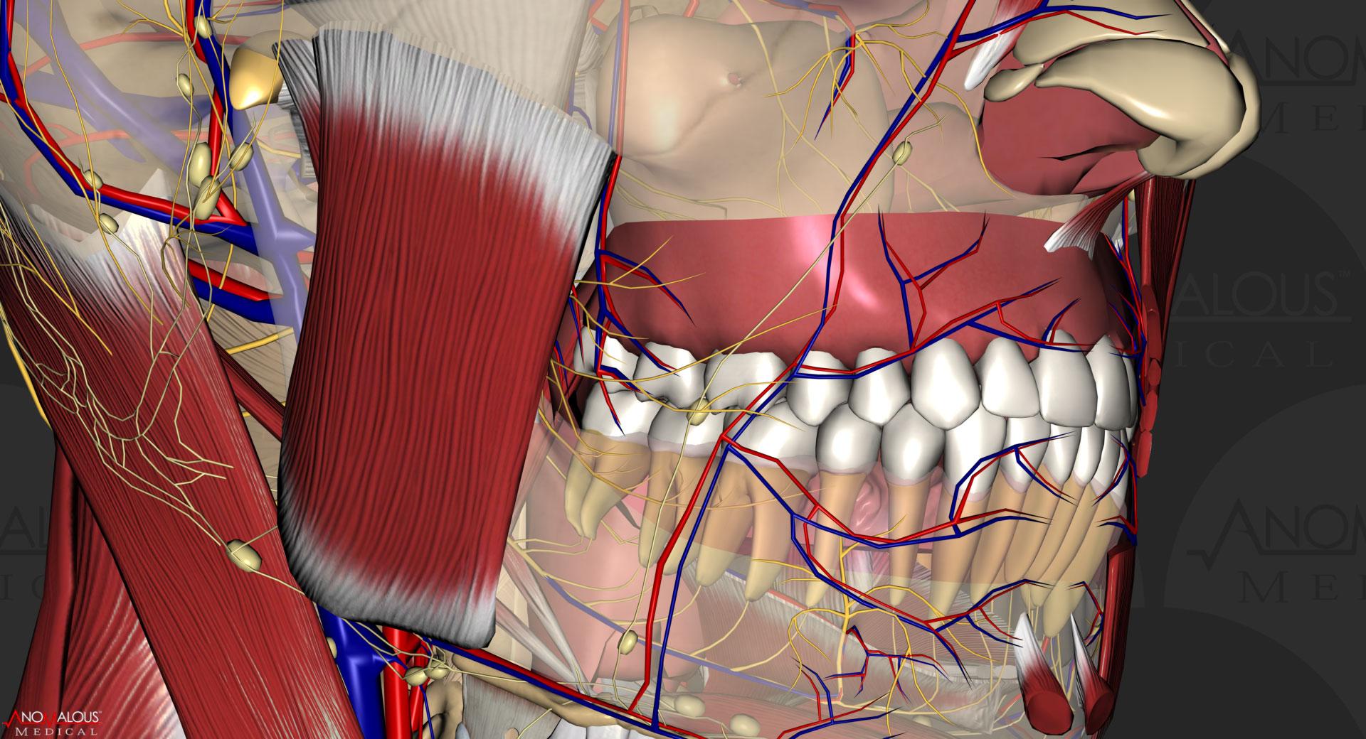 Anomalous Medical ScreenShot